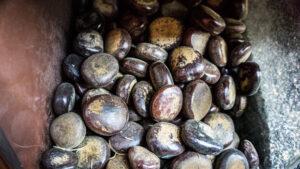 Nicker Bean or Sea Bean