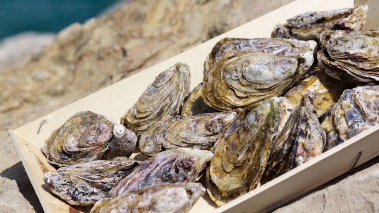 Explore the cool waters of Dibba for the first ever farmed oysters of the region.